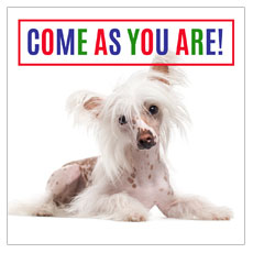 Come As You Are Dog